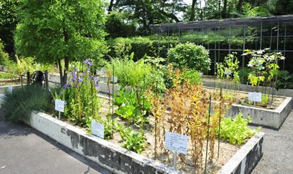 附属薬用植物園
