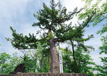 瞑想の松・展望台